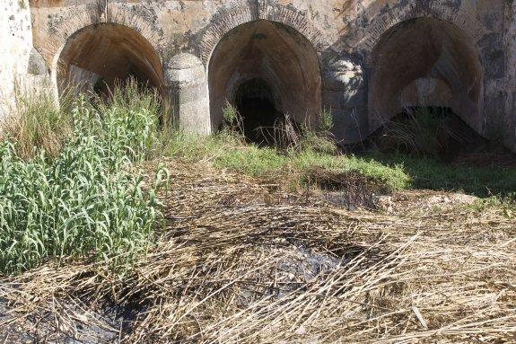 Maleza acumulada en el río Sellent a su paso por Cárcer, una de las zonas que preocupa a los vecinos ante el riesgo de riadas. :: D. Torres
